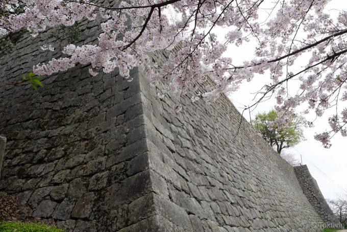 丸亀城の石垣と桜 (X-T1 + XF16mm F1.4R)