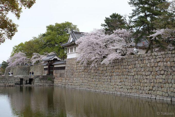丸亀城 大手二の門と桜 (X-T1 + XF35mm F1.4R)