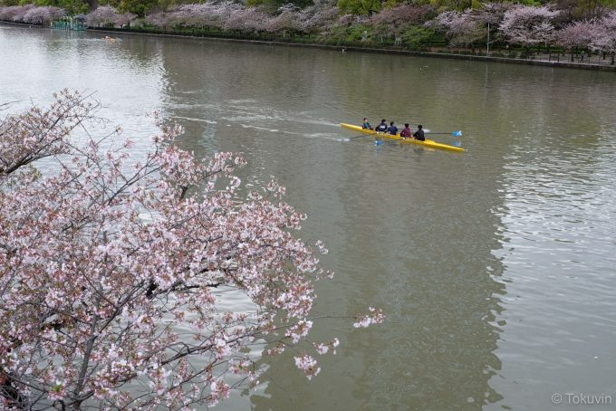 大川の桜(X-T1 + XF35mm F1.4R)