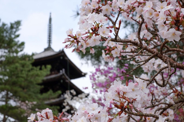 仁和寺 五重塔。