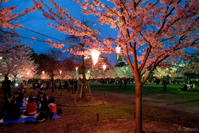 高松城 桜の馬場 (X-T1 + XF16mm F1.4R)