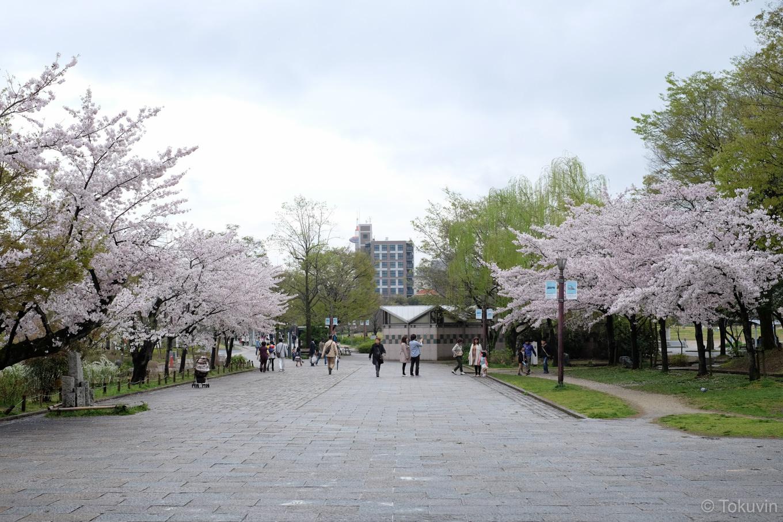 桜の美しい梅小路公園。