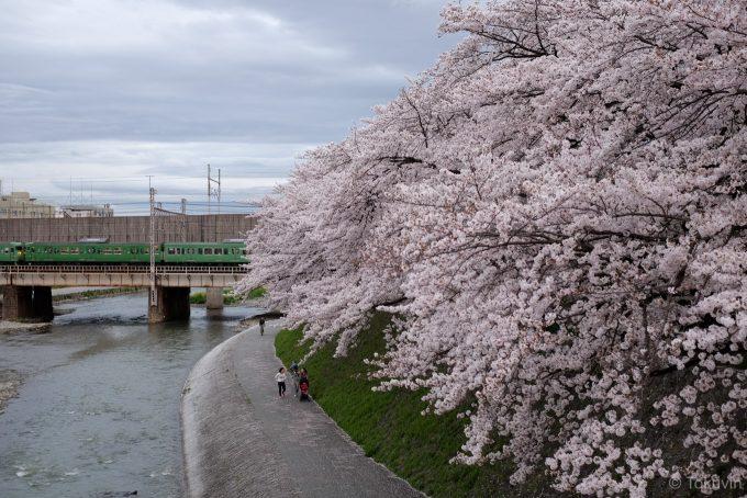 鴨川沿いの桜と鉄橋 (X-T1 + XF35mm F1.4R)