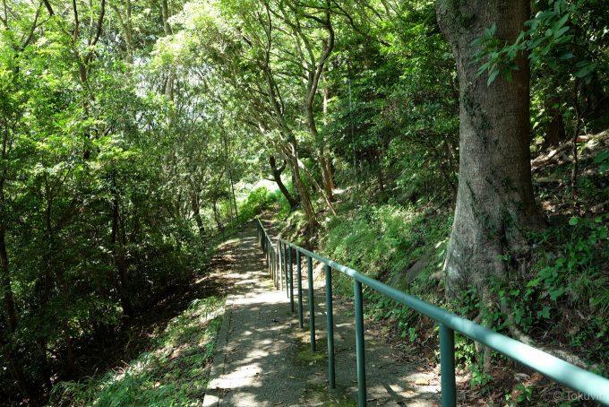 朝日山公園からの帰り道