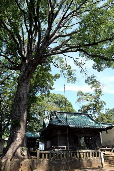 多賀神社の拝殿