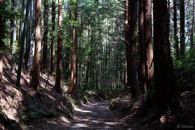 駅裏の林道