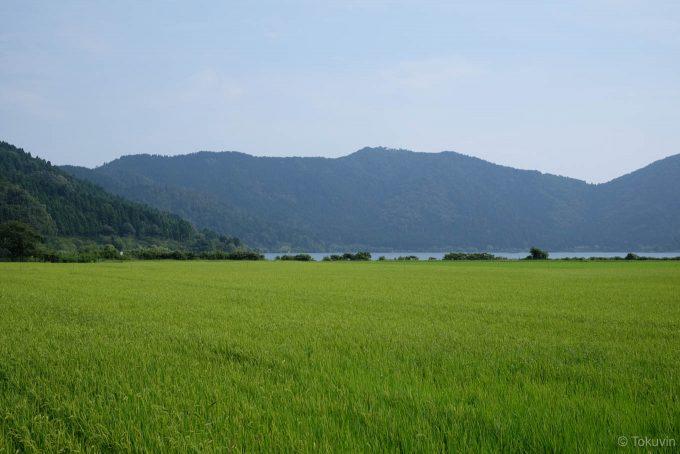 余呉湖と田んぼ
