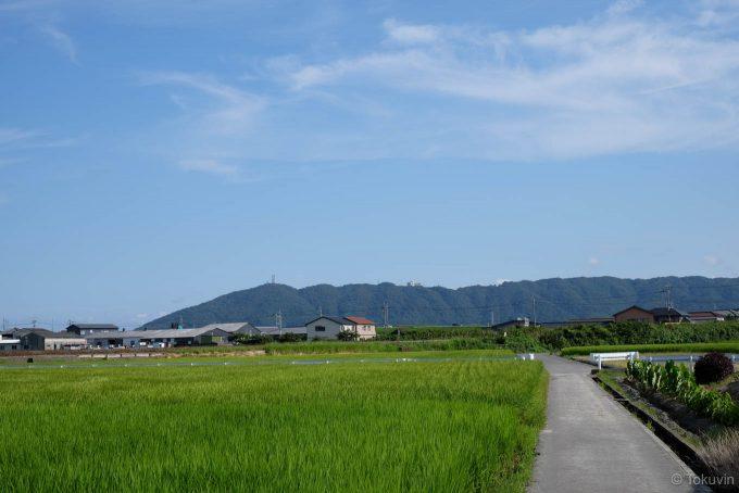 田んぼの中の道路