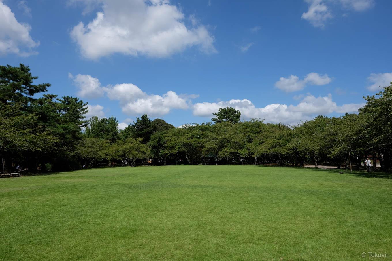 芝生の広がる小竹薮広場。