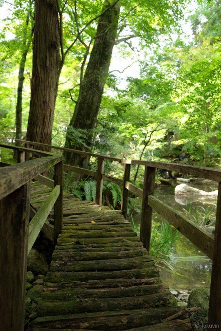 池の縁にかかる趣ある木橋