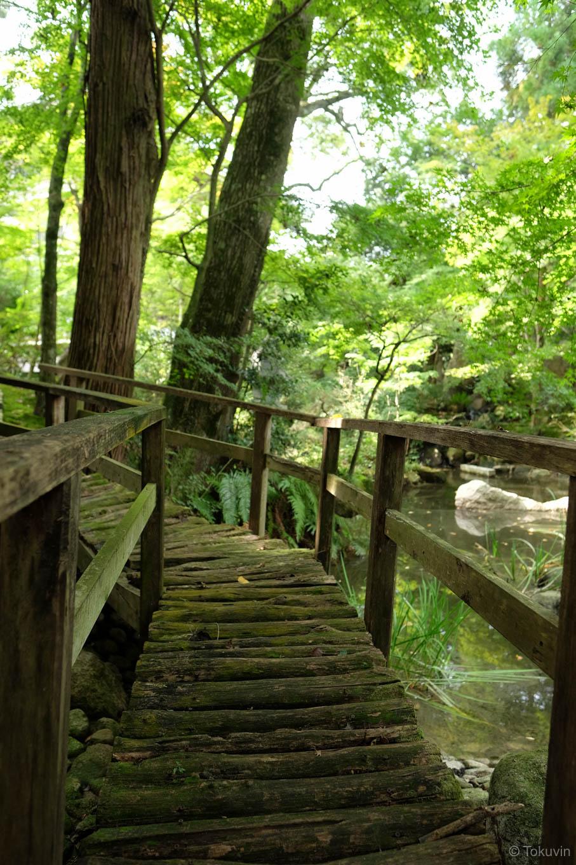 池の縁にかかる趣ある木橋。