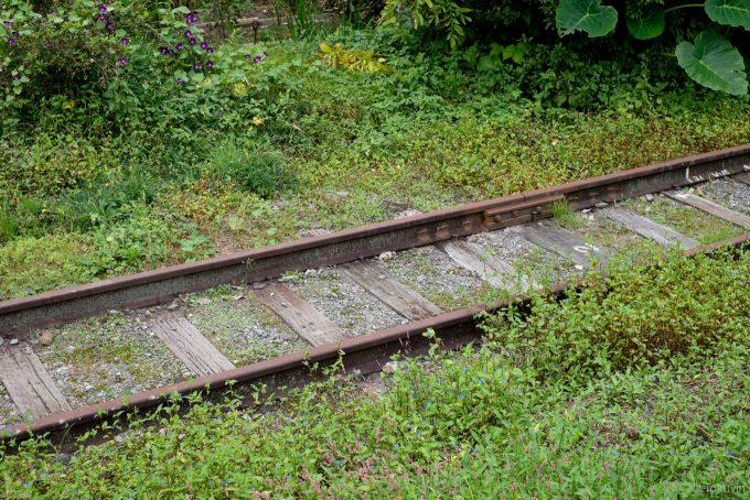 雑草に覆われる駅裏の線路