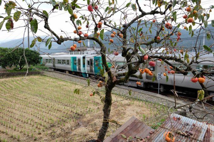 徳島線の列車が走り去る (FUJIFILM X-T1 + XF16mm F1.4R)