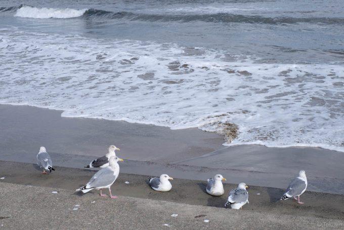 カモメがたむろする海辺