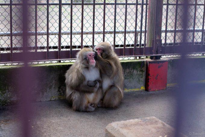 島尾海浜公園の猿