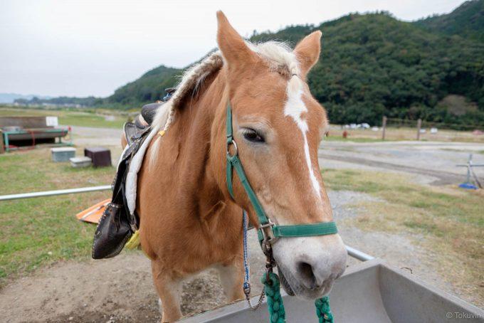 オランダ生まれの馬