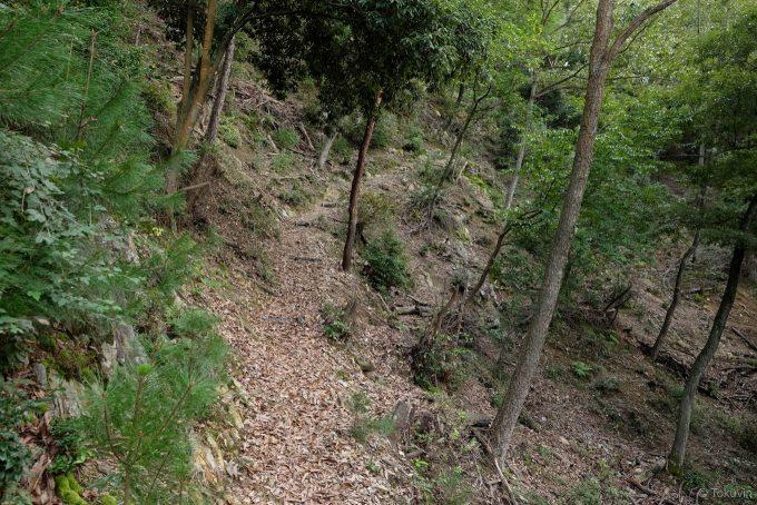 雑木林の中を登っていく