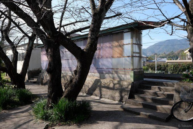 ホーム裏手の桜並木 (X-T1 + XF16mm F1.4R)