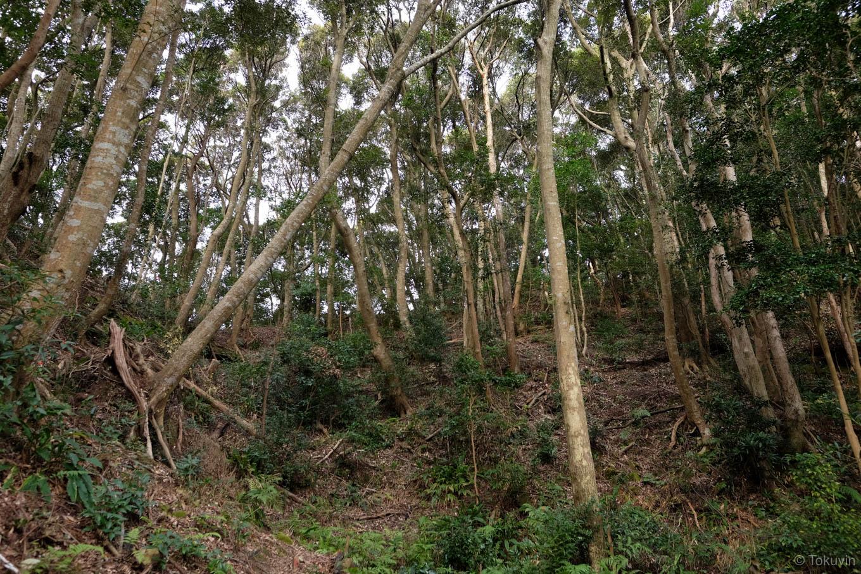 海部城跡は樹林のなか。