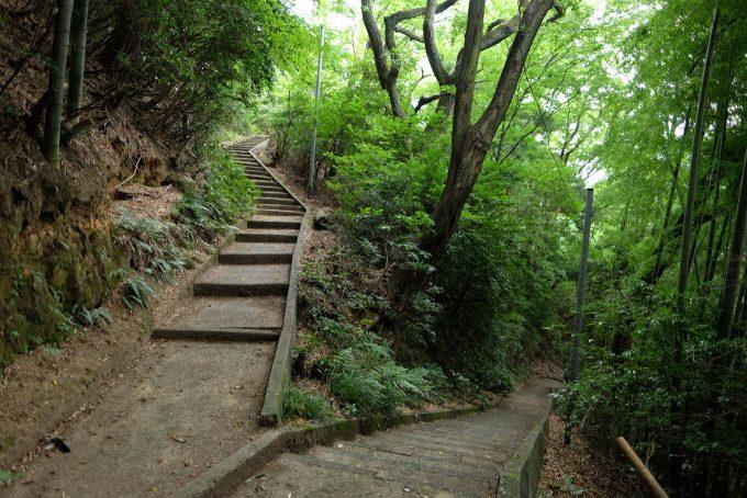 八幡山の整備された歩道 (FUJIFILM X-T1 + XF16mm F1.4R)