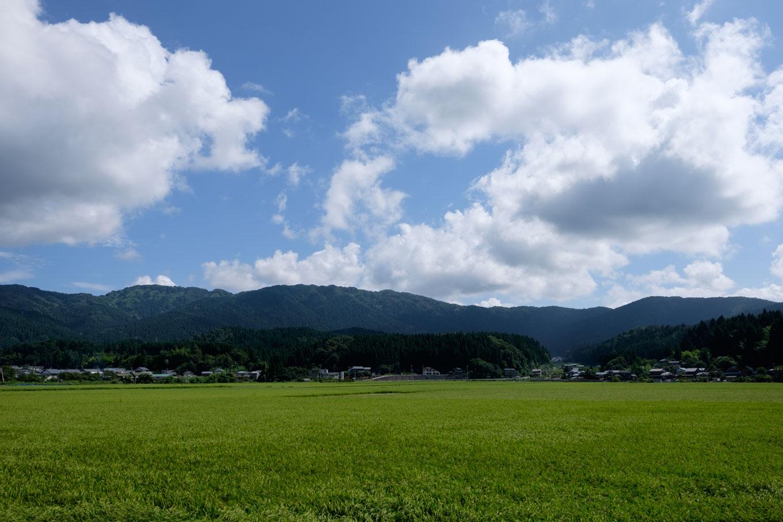 駅の上流側に広がる田んぼ。