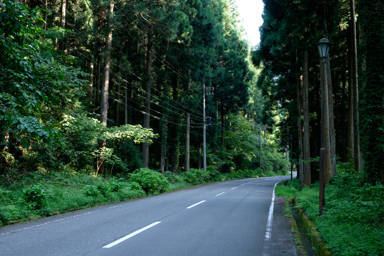 美山森林温泉への道のり。