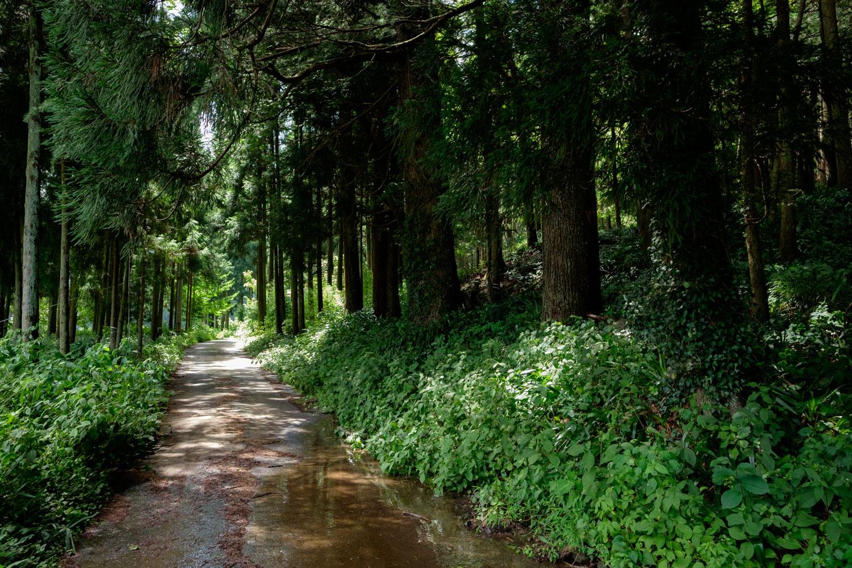 鳴瀧に向かう道路。