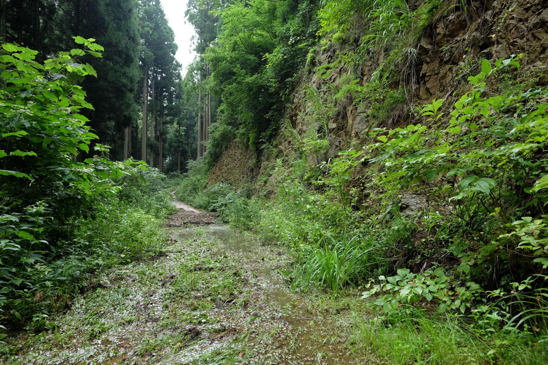 水浸しの林道。