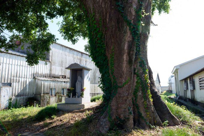 建物に囲まれた一本木 (FUJIFILM X-T1 + XF16mm F1.4R)