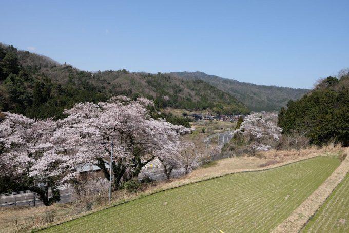 鳥居野の桜(奥が宮原) (FUJIFILM X-T1 + XF16mm F1.4R)