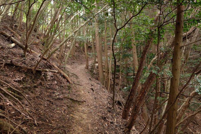 八木城跡へと続く登山道 (FUJIFILM X-T1 + XF16mm F1.4R)