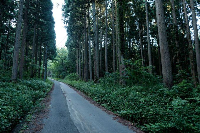 登山道へと続く道路 (FUJIFILM X-T1 + XF16mm F1.4R)