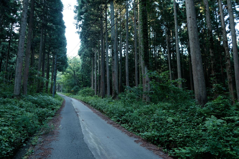 登山道へと続く道路。