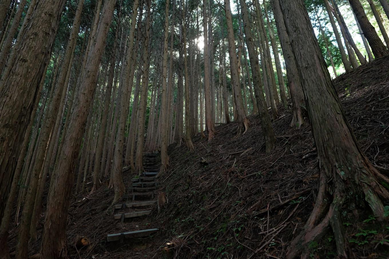 薄暗いスギ林の中を伸びる矢筈山登山道。