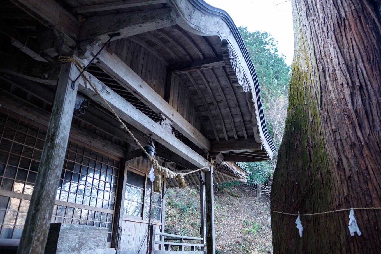 大杉と臥龍藤が正面に立つ千磐神社の拝殿。