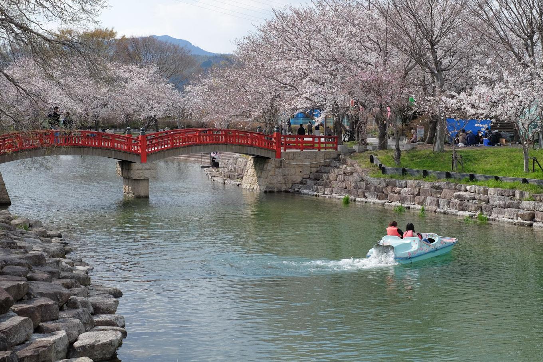 桜堤公園。