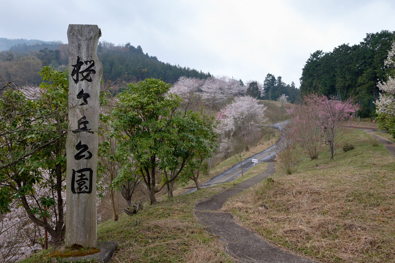 桜ヶ丘公園。