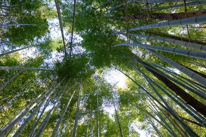 竹林の中を下山。