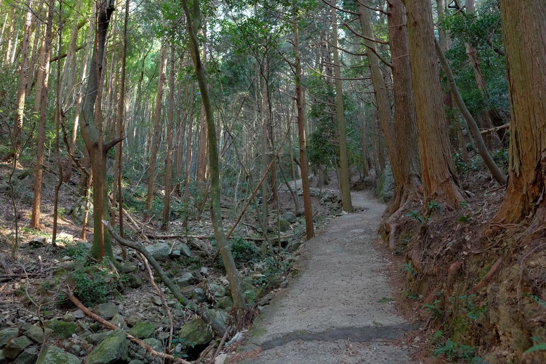 どこまでも舗装された登山道。