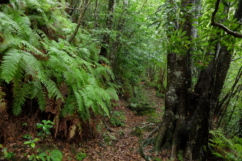 森閑とした参道。