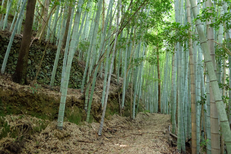 小張崎に向かう竹林に包まれた四国のみち。
