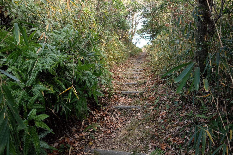 擬木の階段で整備された山上への歩道。